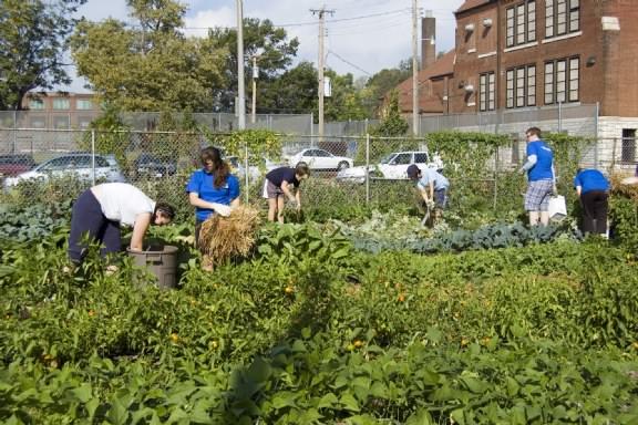 New Roots Urban Farm