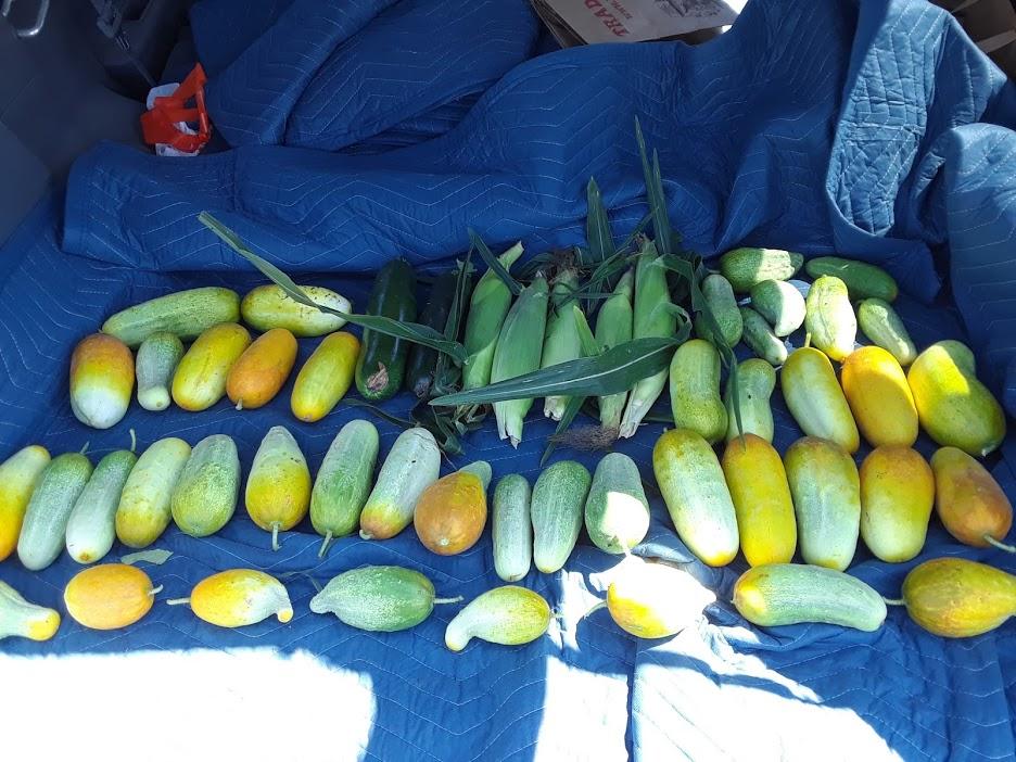 Harvest1.jpg