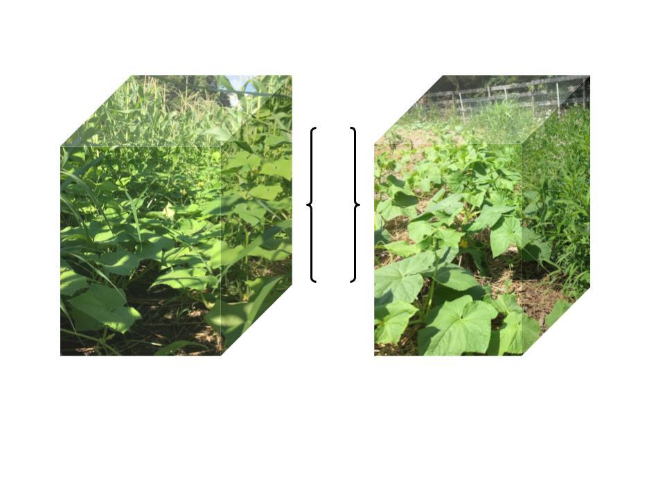 poly vs bio2.jpg