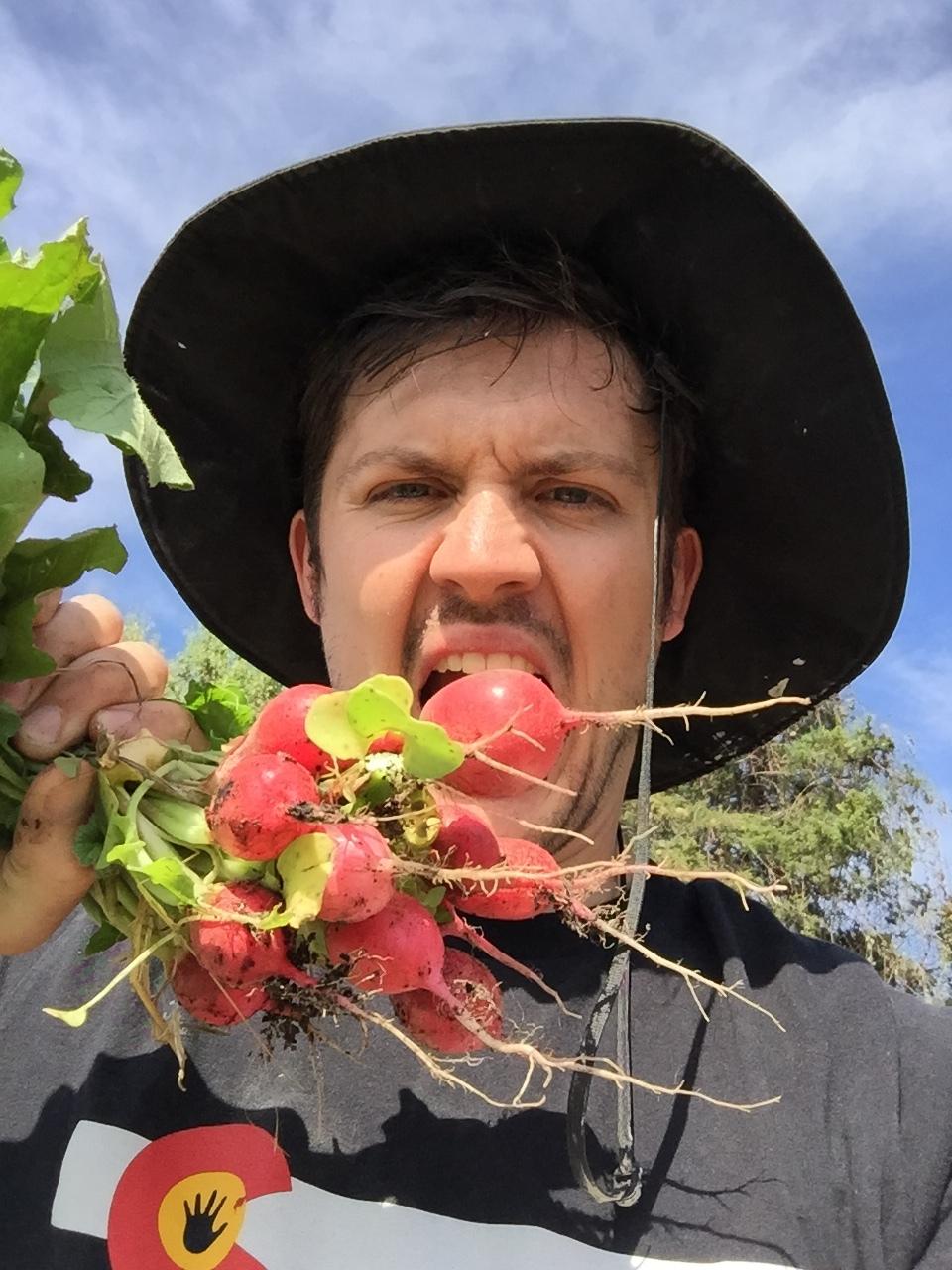radish harvest 1.JPG