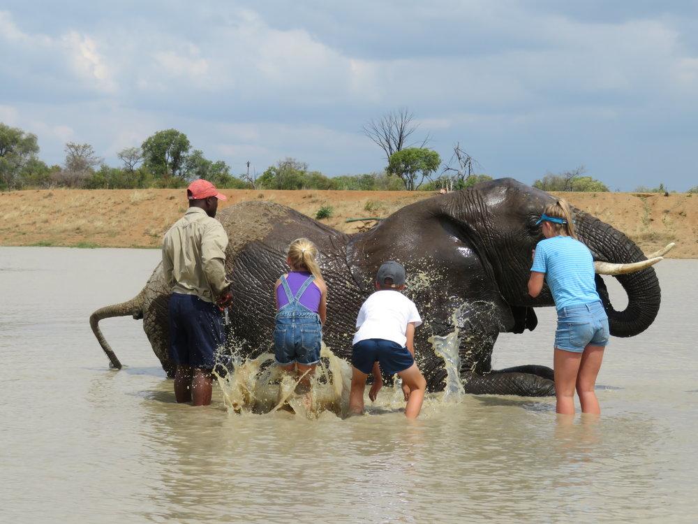 Elephant Spa