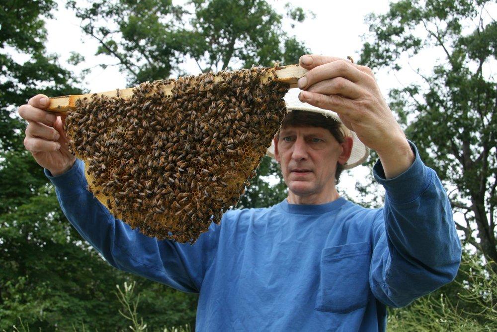 Photo Credit: HoneybeeLives.org