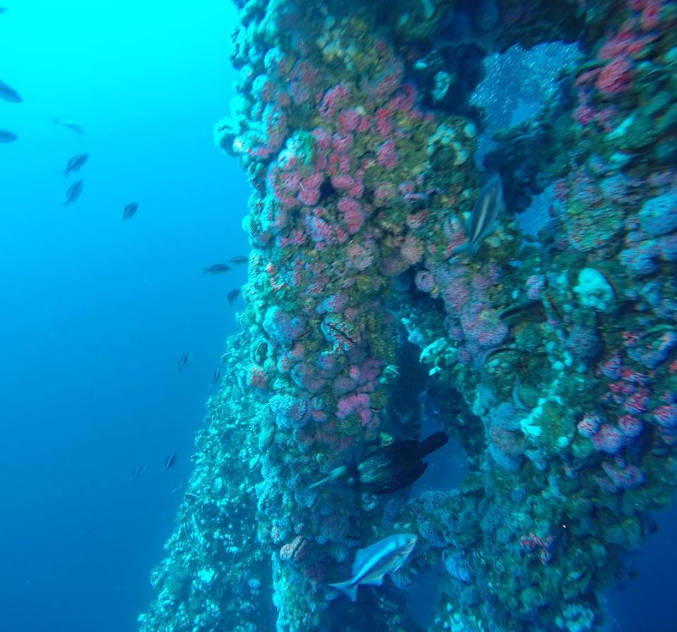 rigs-2-reef-explorers-blue-lattitudes-portsmouth-new-hampshire-blog-seacoast-lately.jpg20.jpg