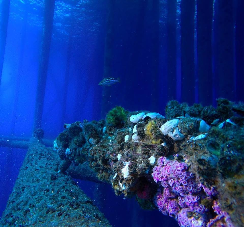 rigs-2-reef-explorers-blue-lattitudes-portsmouth-new-hampshire-blog-seacoast-lately.jpg21.jpg