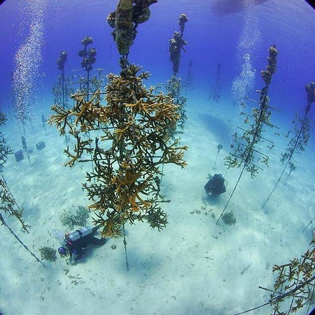 rigs-2-reef-explorers-blue-lattitudes-portsmouth-new-hampshire-blog-seacoast-lately.jpg22.jpg