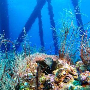 rigs-2-reef-explorers-blue-lattitudes-portsmouth-new-hampshire-blog-seacoast-lately.jpg10.jpg