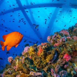 rigs-2-reef-explorers-blue-lattitudes-portsmouth-new-hampshire-blog-seacoast-lately.jpg8.jpg