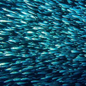 rigs-2-reef-explorers-blue-lattitudes-portsmouth-new-hampshire-blog-seacoast-lately.jpg16.jpg