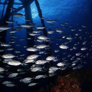 rigs-2-reef-explorers-blue-lattitudes-portsmouth-new-hampshire-blog-seacoast-lately.jpg17.jpg