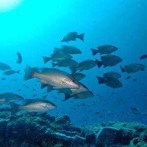 rigs-2-reef-explorers-blue-lattitudes-portsmouth-new-hampshire-blog-seacoast-lately.jpg18.jpg