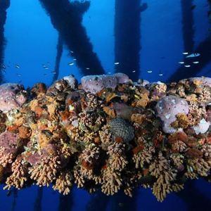 rigs-2-reef-explorers-blue-lattitudes-portsmouth-new-hampshire-blog-seacoast-lately.jpg1.jpg