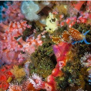 rigs-2-reef-explorers-blue-lattitudes-portsmouth-new-hampshire-blog-seacoast-lately.jpg13.jpg