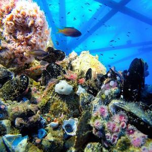 rigs-2-reef-explorers-blue-lattitudes-portsmouth-new-hampshire-blog-seacoast-lately.jpg14.jpg