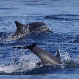 rigs-2-reef-explorers-blue-lattitudes-portsmouth-new-hampshire-blog-seacoast-lately.jpg25.jpg