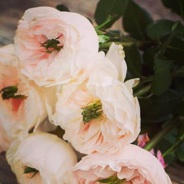 flower-kiosk-shop-portsmouth-new-hampshire-blog-seacoast-lately-weddings.jpg16.jpg
