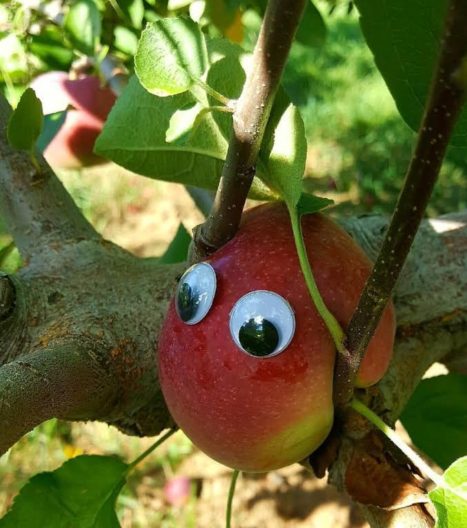 googley-eye-guy-portsmouth-new-hampshire-nh-blog-kittery-maine-new-england-blogger-seacoast-lately.jpg3.jpg