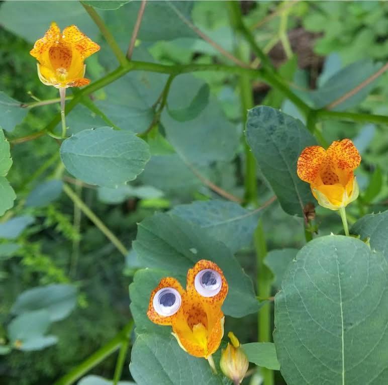 googley-eye-guy-portsmouth-new-hampshire-nh-blog-kittery-maine-new-england-blogger-seacoast-lately.jpg8.jpg