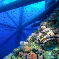 rigs-2-reef-explorers-blue-lattitudes-portsmouth-new-hampshire-blog-seacoast-lately.jpg2.jpg