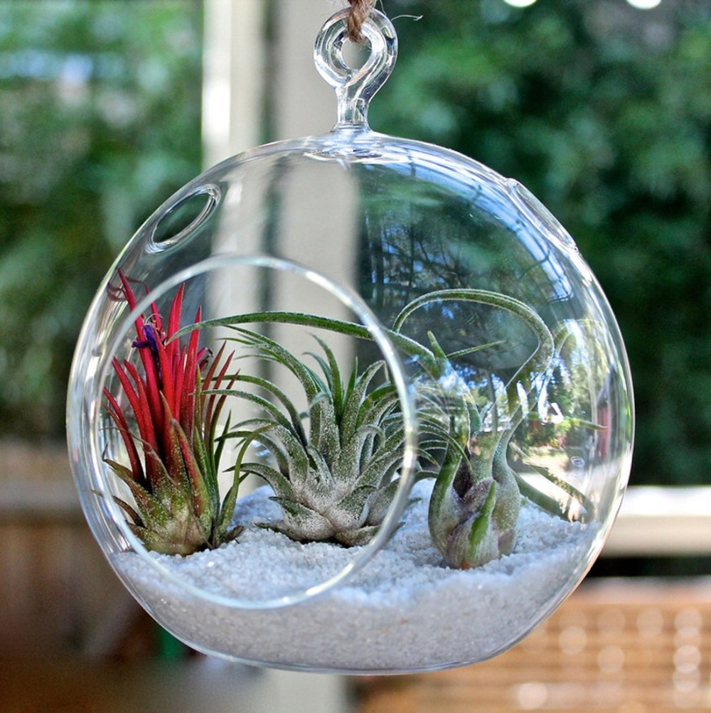 Free-Shipping-Glass-Hanging-100mm-Round-Ball-Air-Plant-Terrarium-Hanging-Votive-Candle-Holder-100-Pack.jpg