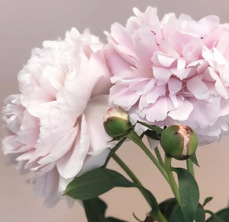 birch-rose-portsmouth-nh.jpg1.jpg