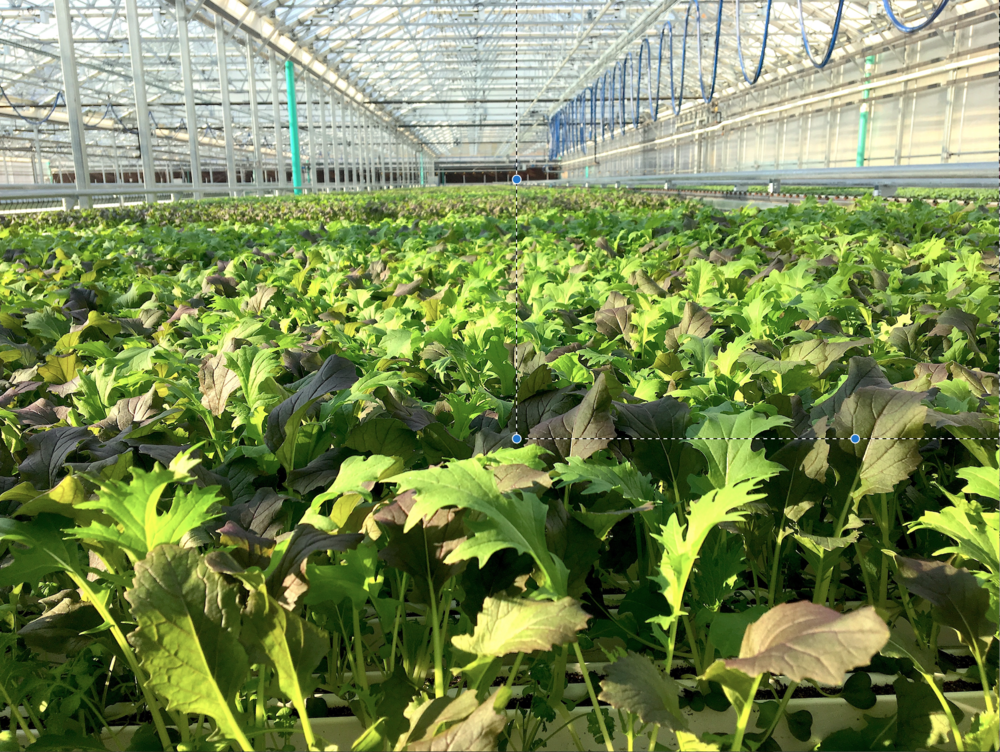 lef-farms-greens.jpg6.png