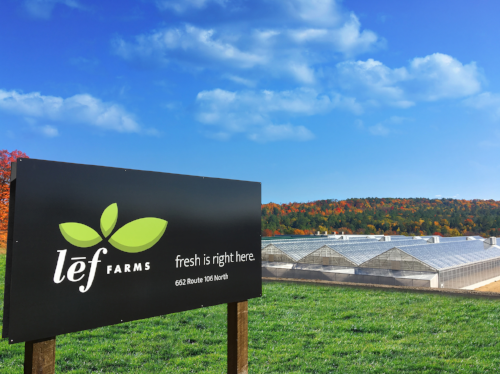lef-farms-greens.jpg12.png