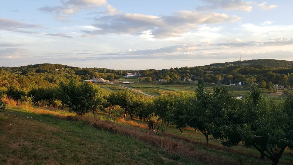 cider-hill-farm-amesbury-massachusetts-exeter-nh-newburyport-apple-picking.jpg2.jpeg