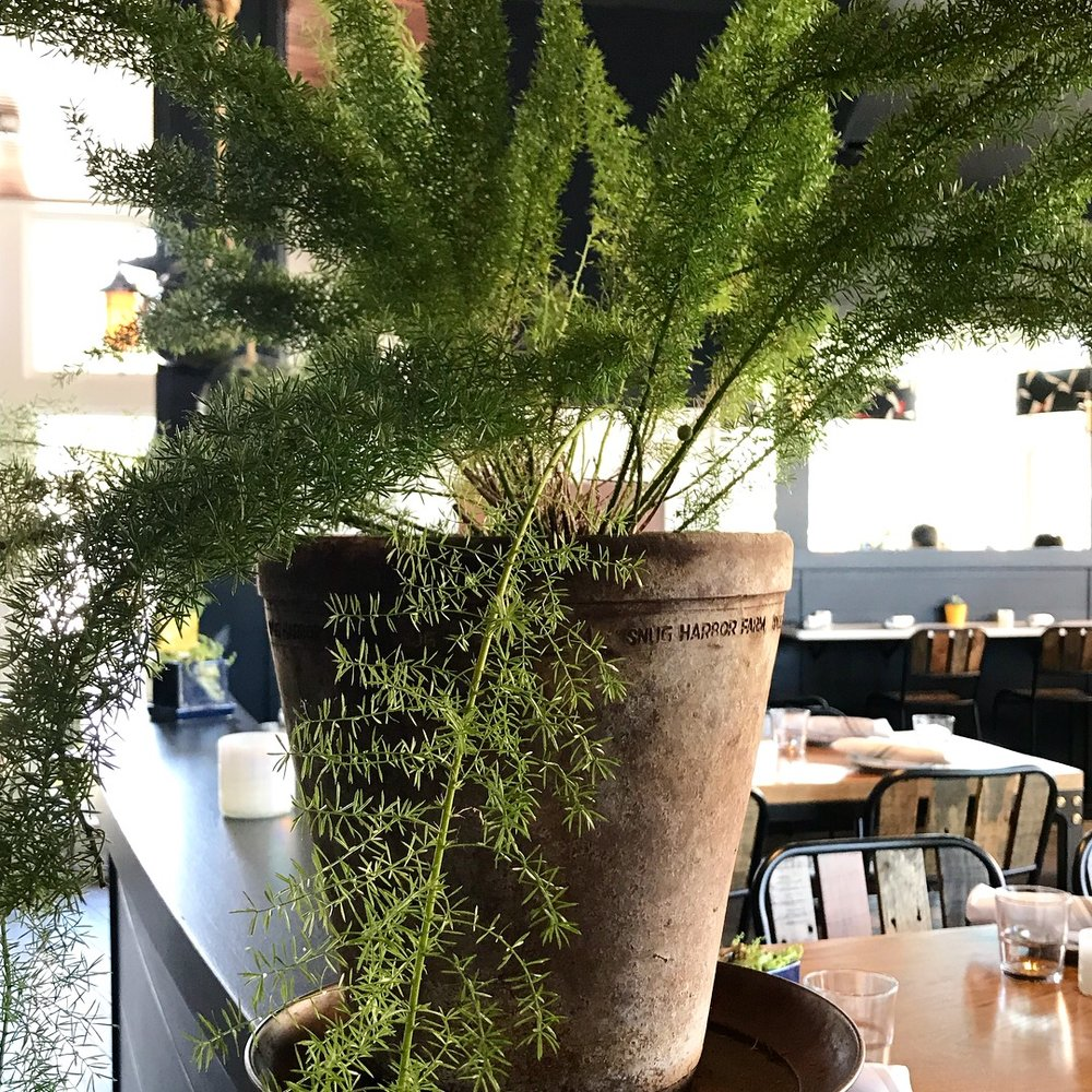 It's local! - Fresh seafood and pretty plants from Snug Harbor Farm... It's the little things that put a smile on our faces!