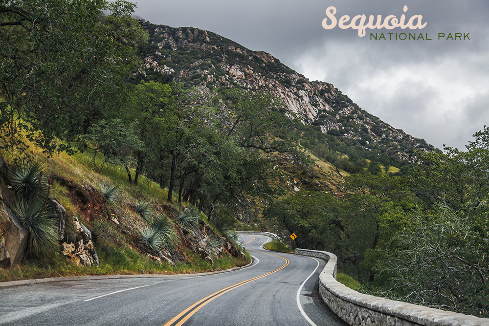 3_SequiaKingsCanyon-X1.jpg