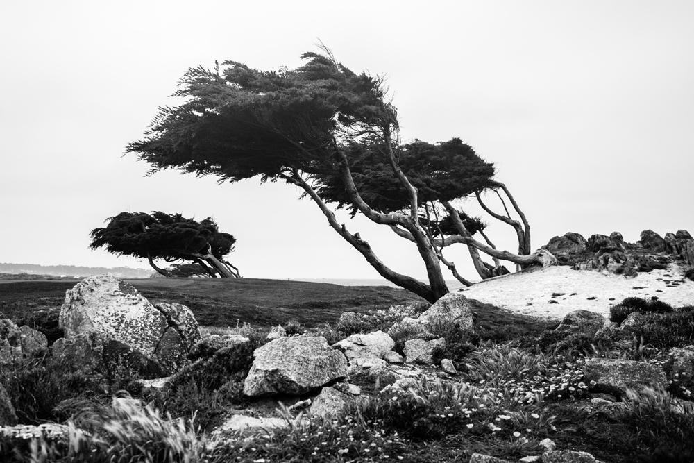 1_Monterey-X3.jpg