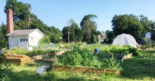 VOLUNTEER AT THE FARM Wed., Aug. 23  5:30 - 7:30 pm  - Come for all or part