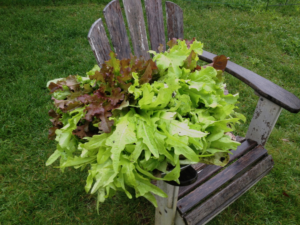 From Maine garden to Manhattan table