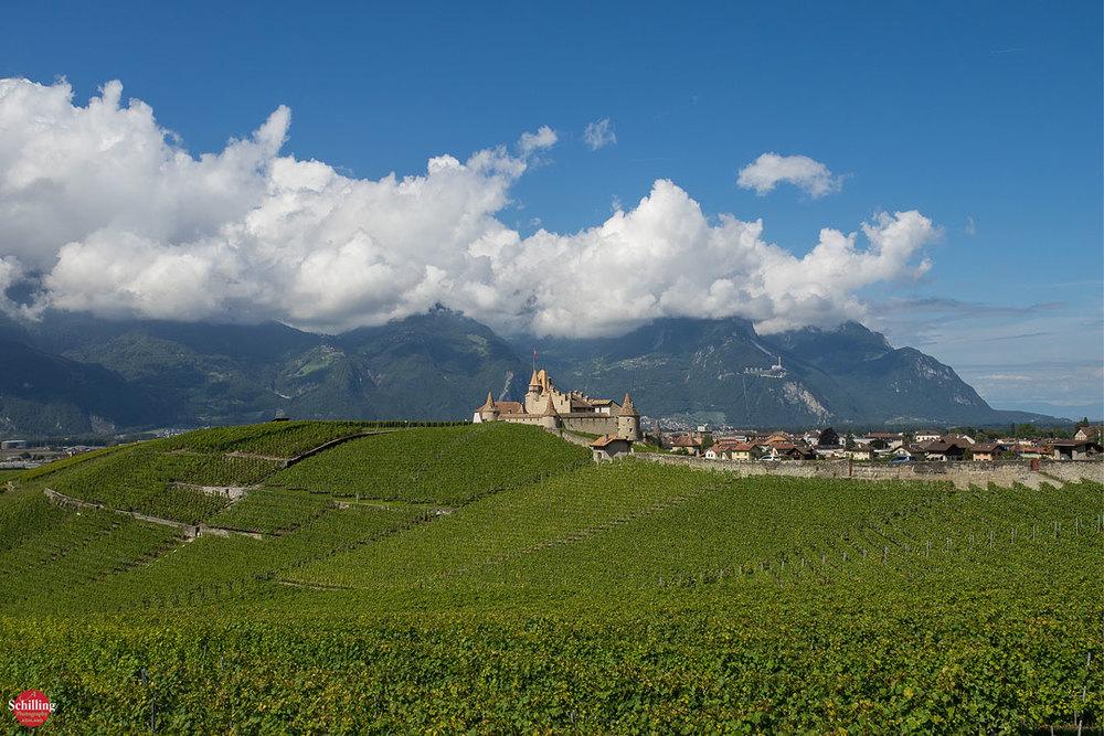 Chateau-d'Aigle-V.jpg