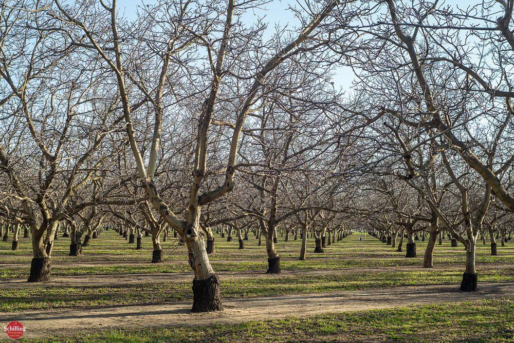 Walnut-Orchards-I.jpg