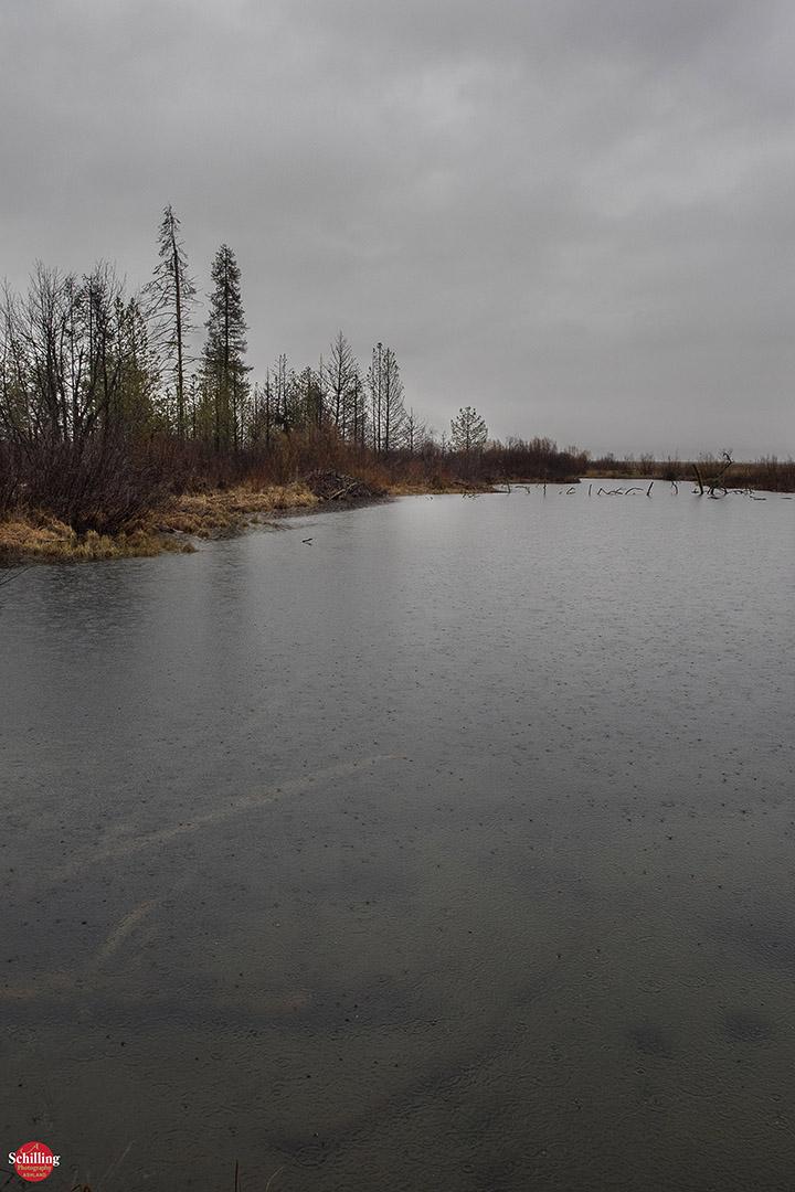 Rain In The Beaver Marsh