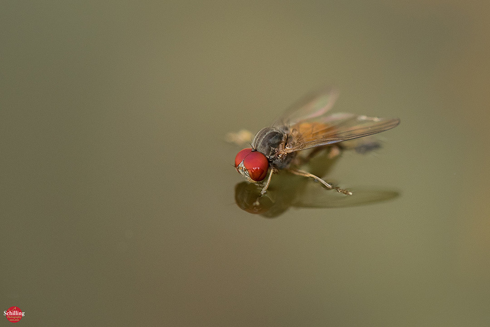 The Fly 3