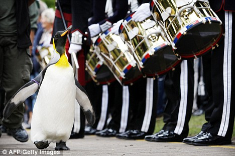 sir nils olav the penguin