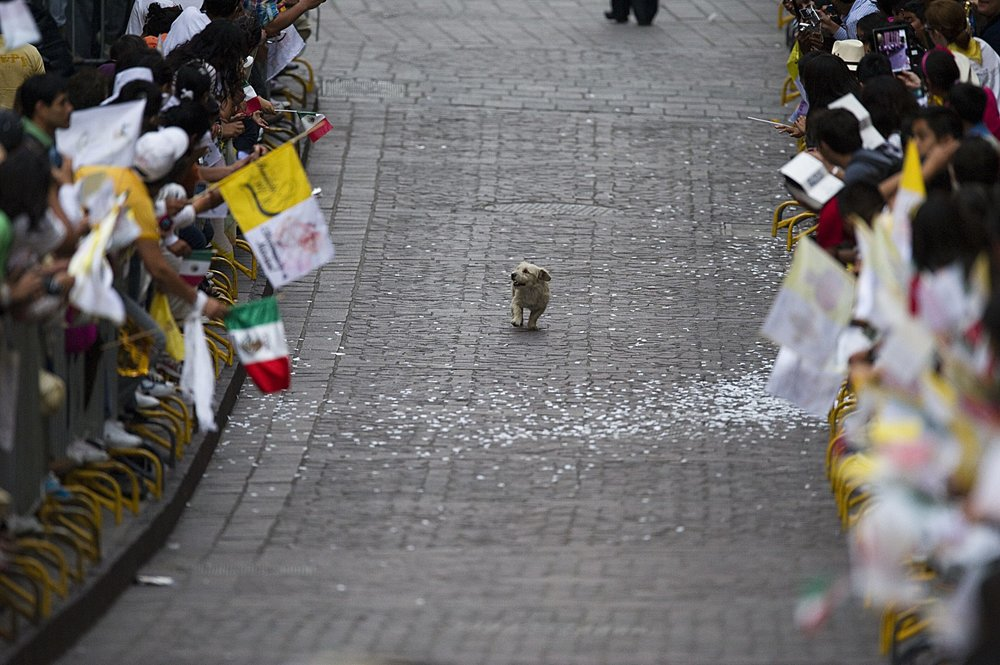 dog thinks parade was for him