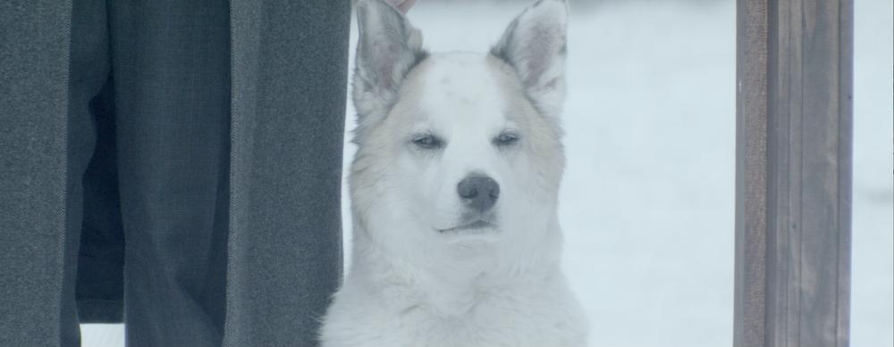 DOG CLOSE UP SNOW.png