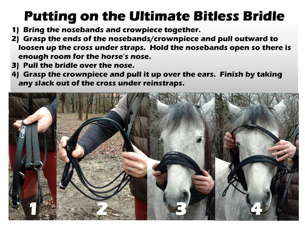 UBB - How to put on the bridle 3 5 15.jpg