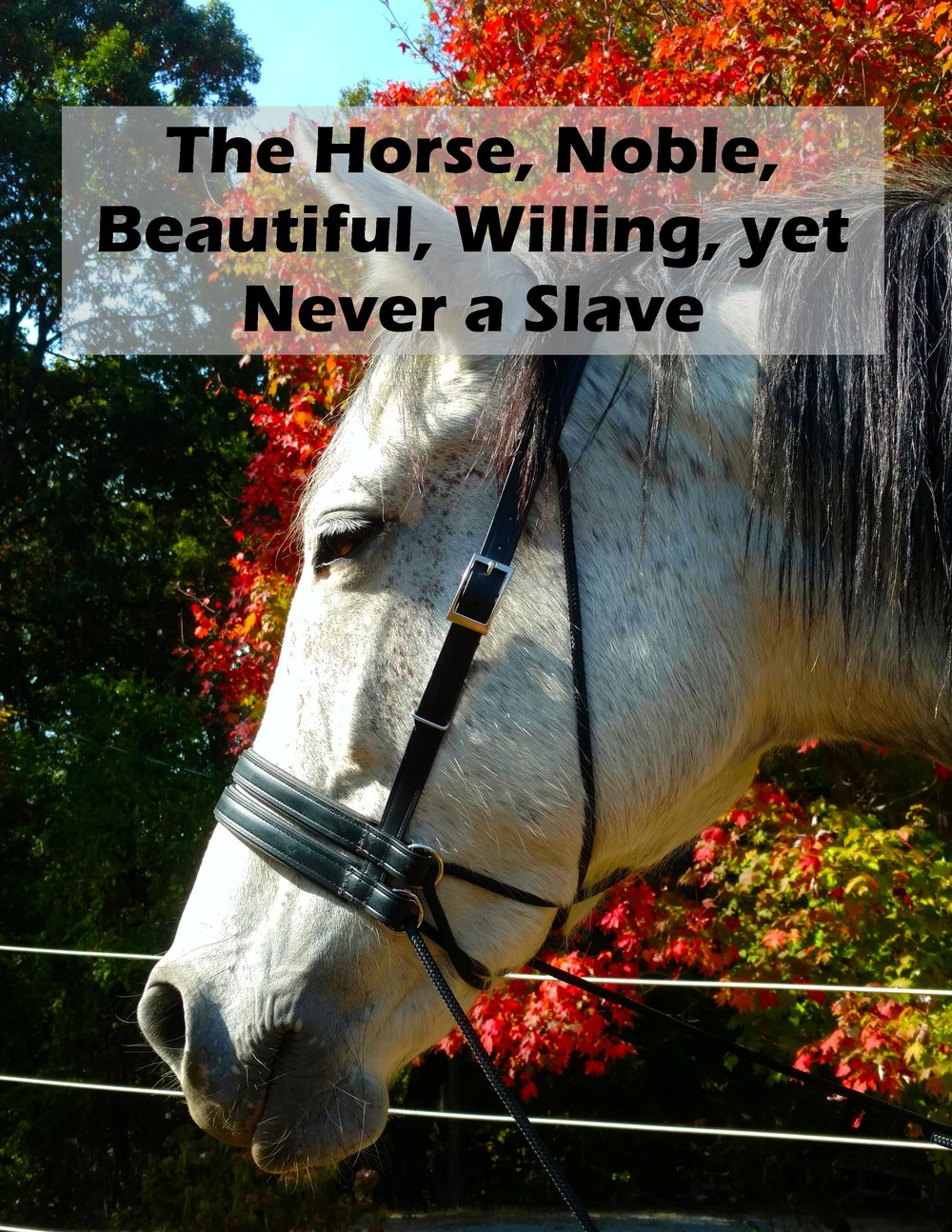 0 Slave.jpg