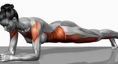 The red areas show all the muscles strengthened during planks.