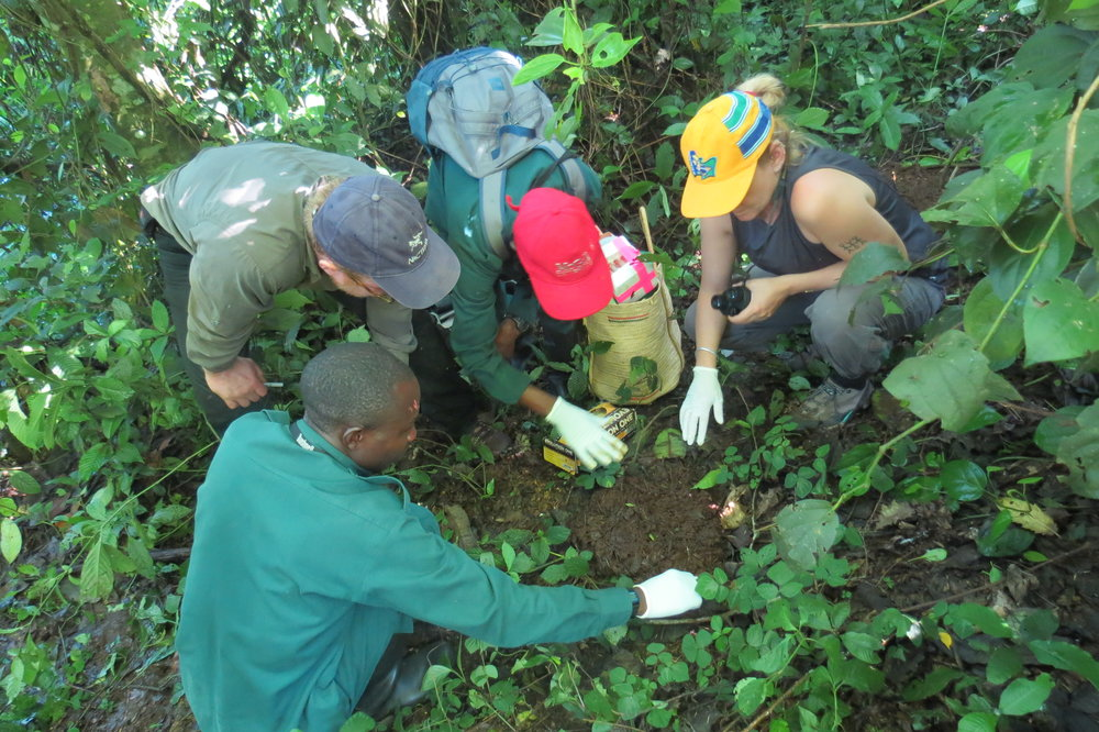 fecal sample collection, kibale national park, uganda.