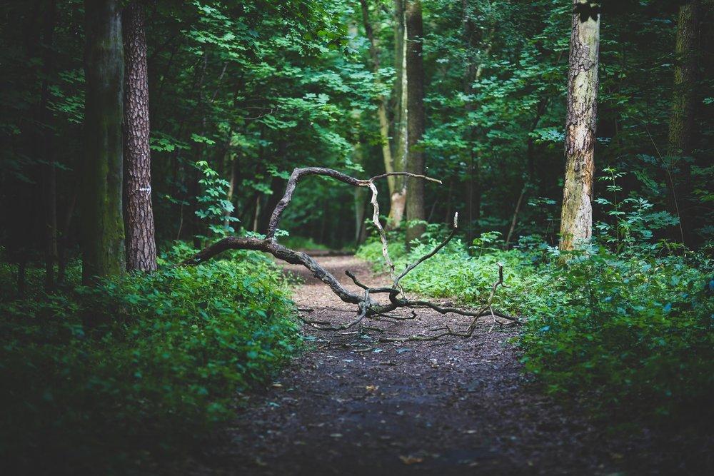 branch-conifer-dawn-6039.jpg