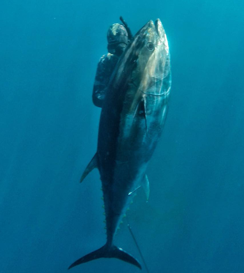 SPEARFISHING - We will put you onto the fish of a lifetime!