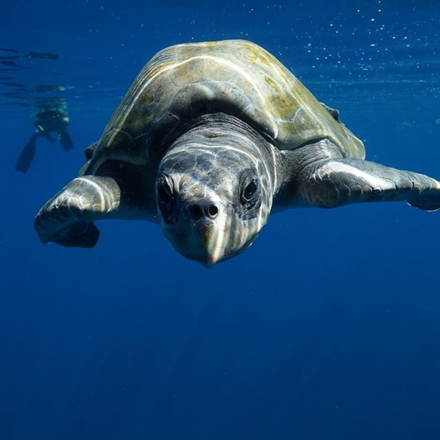 I like turtles. #seaturtle #seaturtles #loscabos #bassfishing #indigoadventures #visitmexico