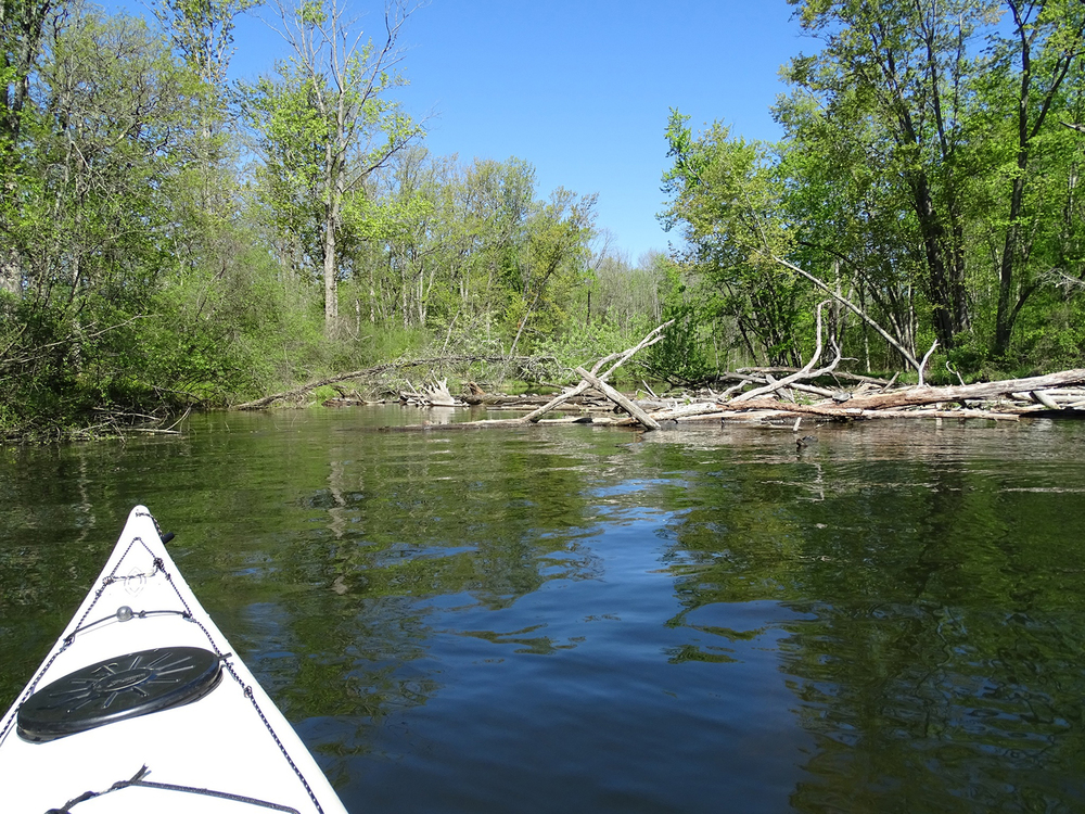 Log jam near the mouth of the Kayaderosseras Creek, passable on the left.  Alan Mapes