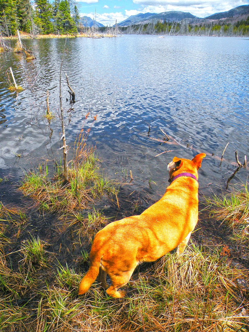 Lexie enjoying the pond's edge. Bill Ingersoll