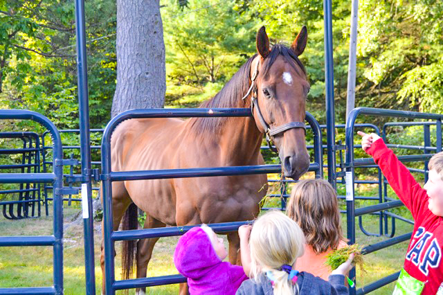 Greeting retired racehorses at the 2016 Run for the Horses 5K Run/Walk in Saratoga Springs.  Jennifer Stevens
