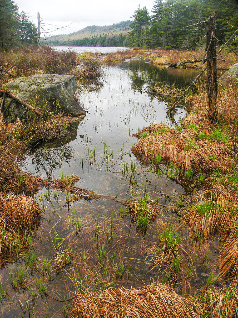 Puffer Pond   marshy outlet.   Bill Ingersoll